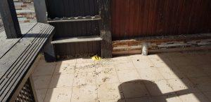 לכלוך של יונים במרפסת www.nika-yon.co.il