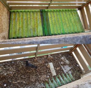 ניקוי גגון מצואת יונים